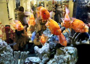Yes, life sometimes seems like being caught in a goldfish bowl...in Harrods, Brompton Road, SW3 ;).