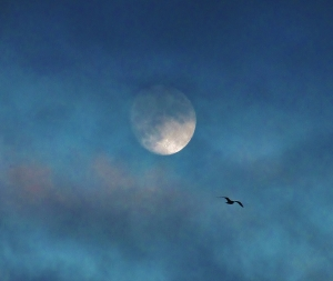 Moon and bird...
