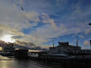 Red Funnel ferries and seagull at Town Quay...
