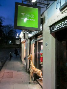 Giraffe peering out of the doorway of 'The 100 Acres' shop in Heath Street, Hampstead...;)
