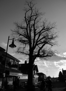 Tree, into the light, Middle Road, Park Gate...