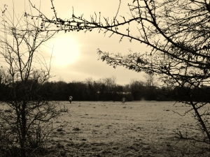 Field with two horses, Warsash Road, around  nine-ish this morning..